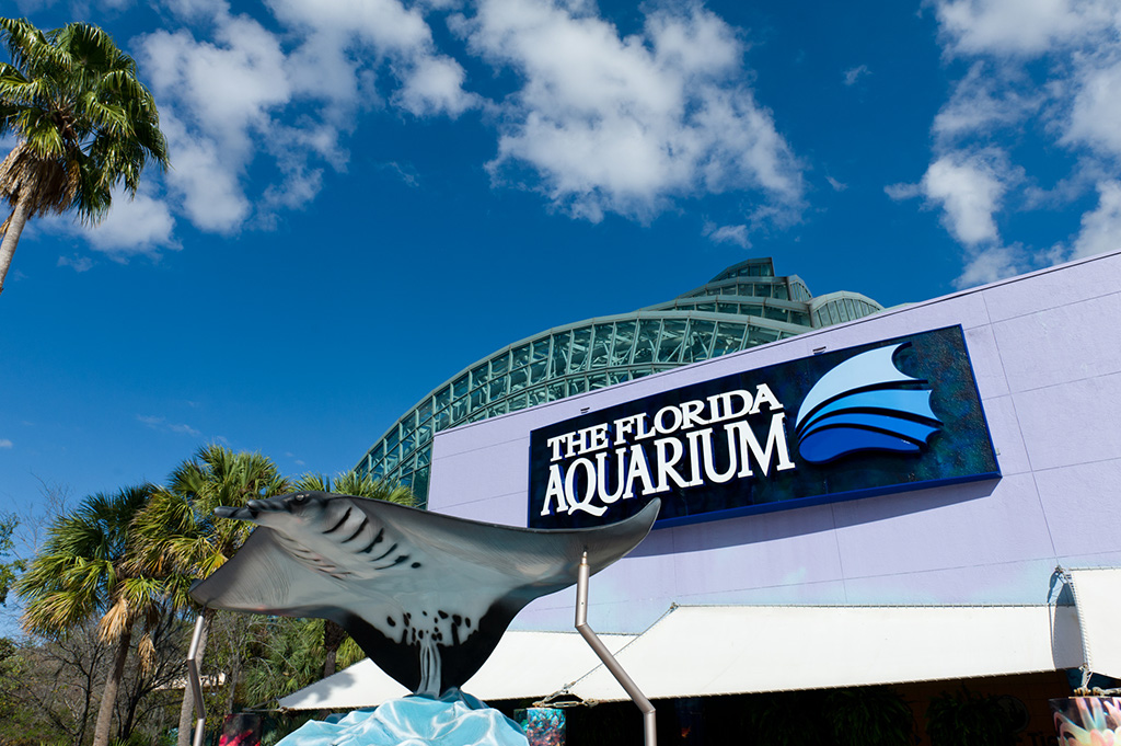 Navy & Pink Tampa Destination Wedding - The Florida Aquarium by Aaron Bornfleth Photographer (15)