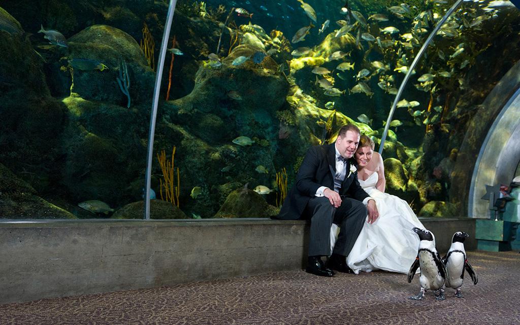 Navy & Pink Tampa Destination Wedding - The Florida Aquarium by Aaron Bornfleth Photographer (18)