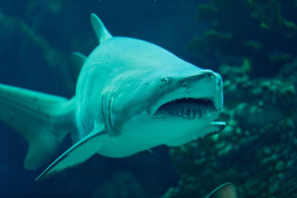 Navy & Pink Tampa Destination Wedding - The Florida Aquarium by Aaron Bornfleth Photographer (16)