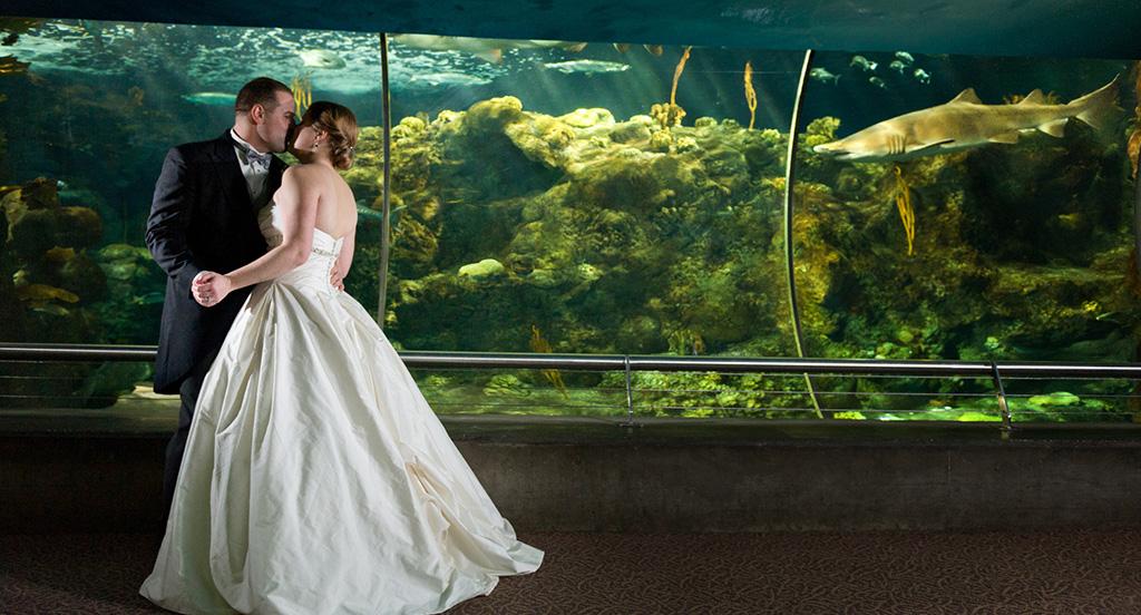 Navy & Pink Tampa Destination Wedding - The Florida Aquarium by Aaron Bornfleth Photographer (19)