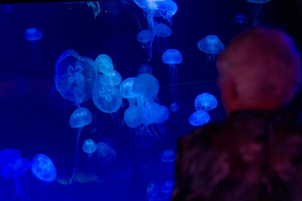 Navy & Pink Tampa Destination Wedding - The Florida Aquarium by Aaron Bornfleth Photographer (20)