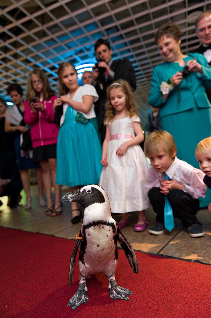 Navy & Pink Tampa Destination Wedding - The Florida Aquarium by Aaron Bornfleth Photographer (21)