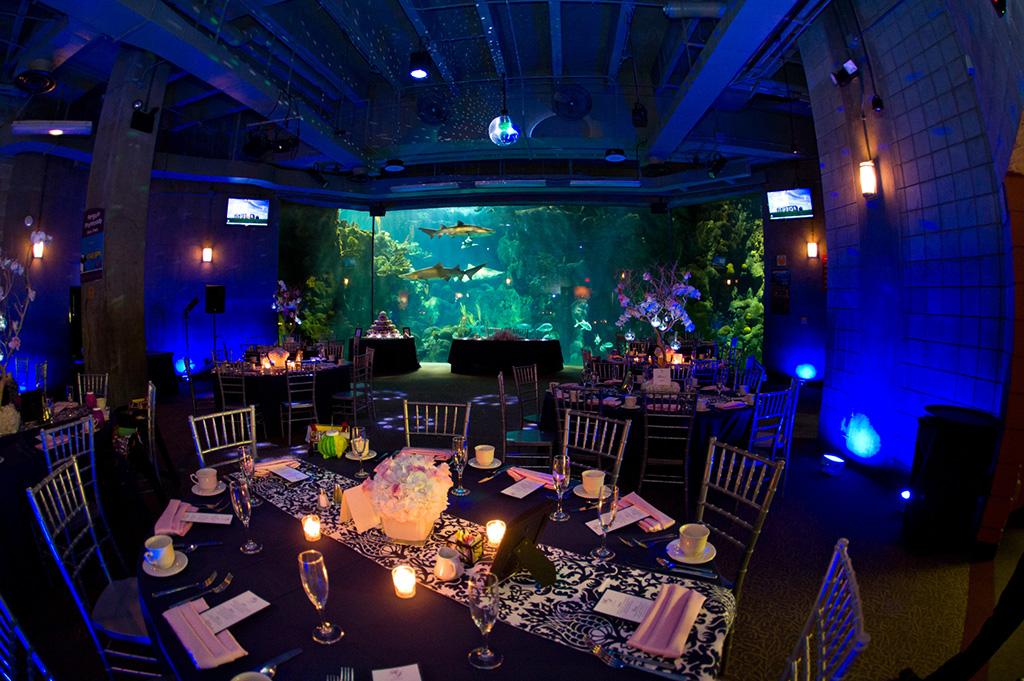 Navy & Pink Tampa Destination Wedding - The Florida Aquarium by Aaron Bornfleth Photographer (24)