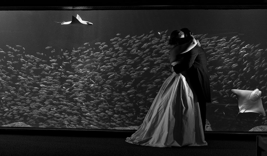 Navy & Pink Tampa Destination Wedding - The Florida Aquarium by Aaron Bornfleth Photographer (35)
