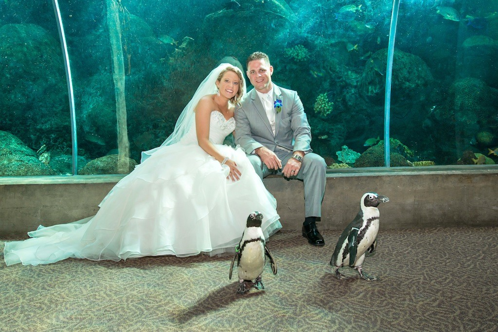 Lime Green & Peacock Blue Tropical Paradise Florida Aquarium Wedding - Tampa Wedding Photographer Captured Images by Augie (18)