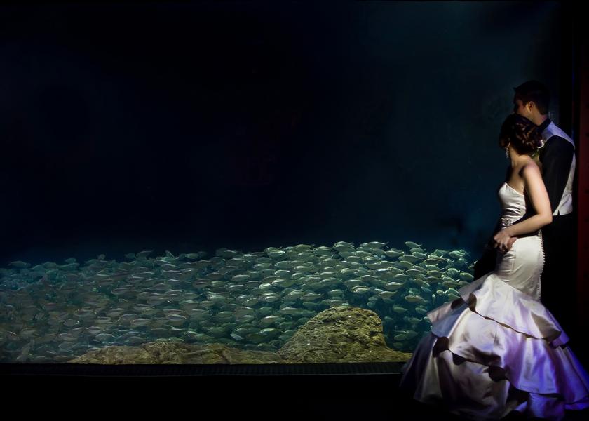 Damask, Purple & Green Florida Aquarium Wedding - Tampa Wedding Photographer Kristen Marie Photography (23)