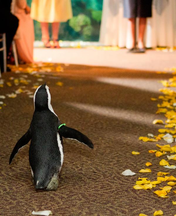 Cobalt Blue and Yellow Florida Aquarium Wedding - Tampa Wedding Photographer Horn Photography and Design (24)