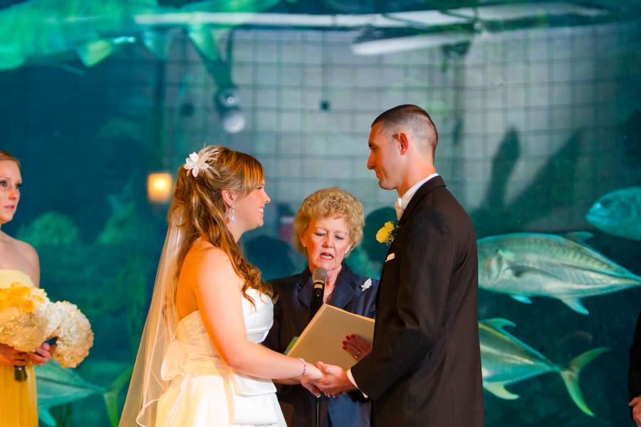 Cobalt Blue and Yellow Florida Aquarium Wedding - Tampa Wedding Photographer Horn Photography and Design (25)