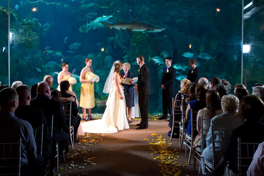 Cobalt Blue and Yellow Florida Aquarium Wedding - Tampa Wedding Photographer Horn Photography and Design (26)