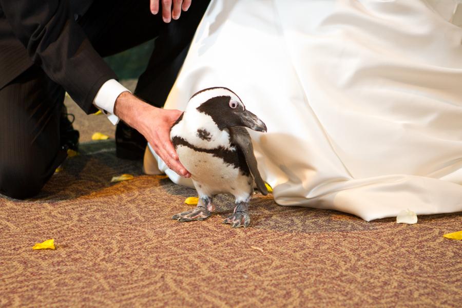 Cobalt Blue and Yellow Florida Aquarium Wedding - Tampa Wedding Photographer Horn Photography and Design (31)