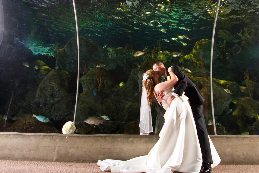 Cobalt Blue and Yellow Florida Aquarium Wedding - Tampa Wedding Photographer Horn Photography and Design (40)