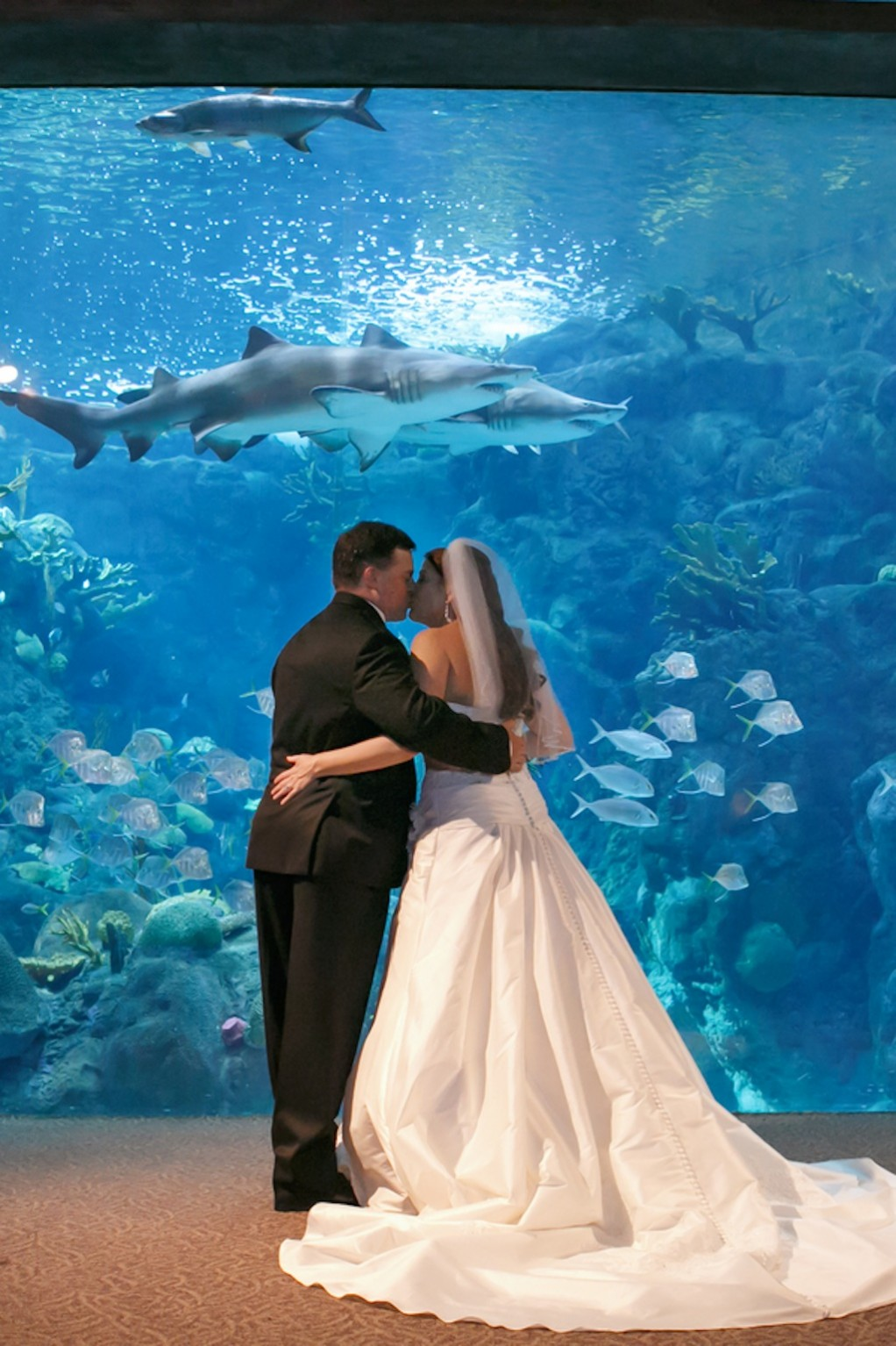 Gasparilla Inspired Peacock Wedding at the Florida Aquarium by Carrie Wildes Photography (17)