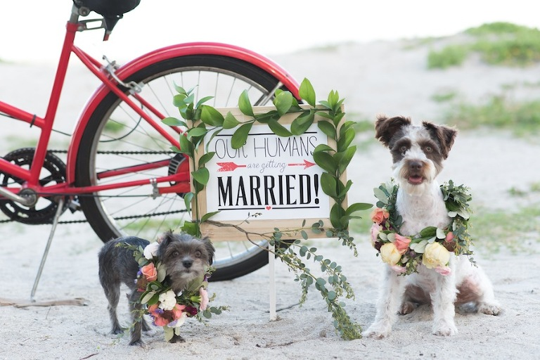 Vintage Ft. De Soto Engagement Session with Bicycle and Dogs | Caroline & Evan Photography