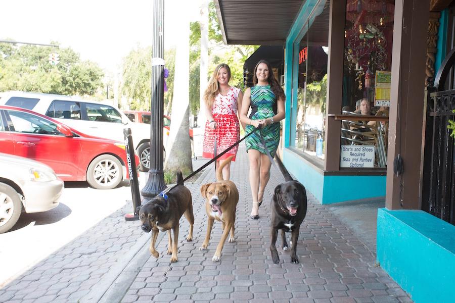 Tampa Bay Dog Pet Sitting Wedding Planner | Fairytail Planning