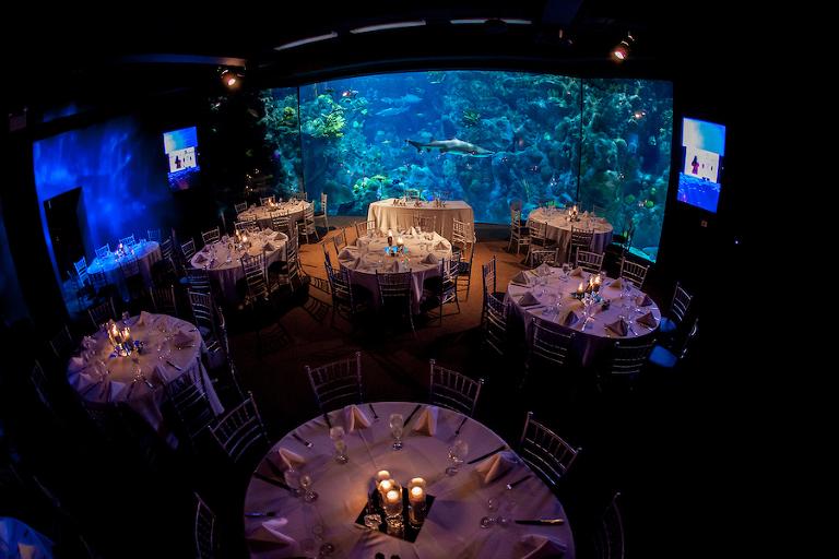 Florida Beach Wedding With Aquarium Reception: Unique Downtown Tampa Wedding Venue