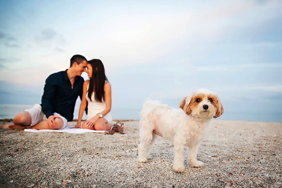 Outdoor, Waterfront Clearwater Beach Engagement Session With Dog   Clearwater Wedding Photographer Limelight Photography