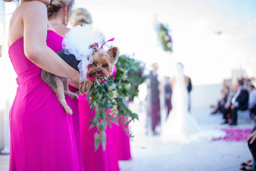 Bright Pink Bridesmaids Wedding Dress with Greenery Bouquet and Yorkie Puppy| Sarasota Wedding Planner Jennifer Matteo Events