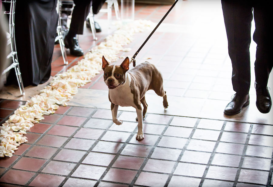 Dog Walking Down Wedding Ceremony Aisle