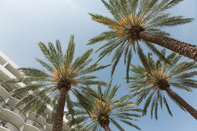 Clearwater Beach Palm Trees