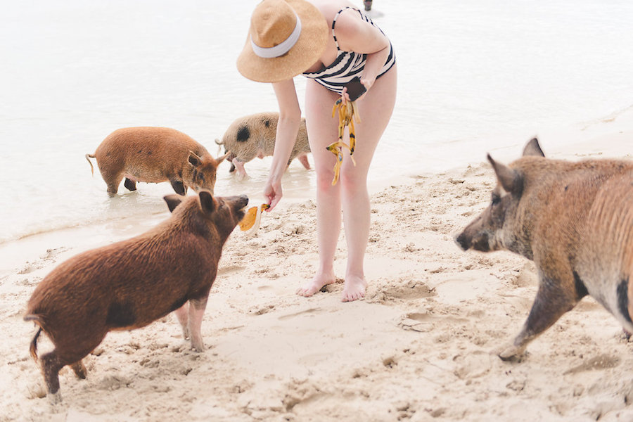 Swimming with the Pigs - Private Boating Excursion in the Abaco Islands | Abaco Beach Resort Bahamas Destination Wedding Venue