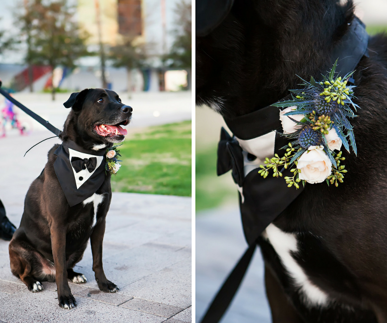 Dog in Tuxedo with Floral Collar | Tampa Bay Wedding Pet Planner Fairytail Pet Care