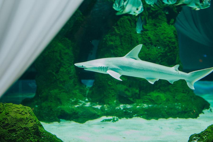 Sarasota Wedding Reception Venue Mote Marine Labaratory and Aquarium