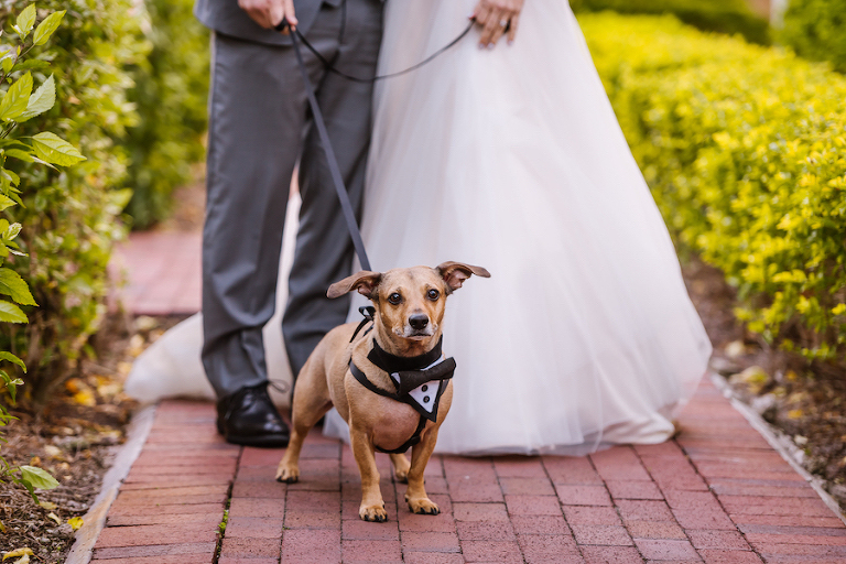 Outdoor Wedding Dog of Honor Portrait wearing Tuxedo Harness | Wedding Pet Coordinating from Tampa Bay Fairy Tail Pet Care