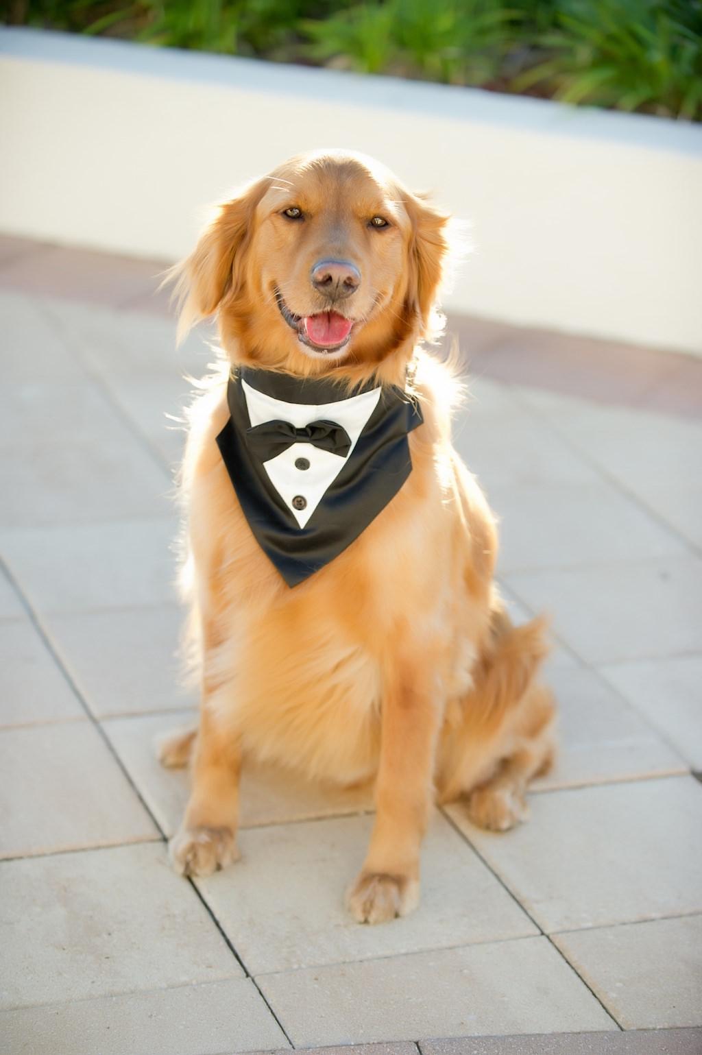 Dog of Honor Wedding Pet Portrait wearing Tuxedo Collar | Tampa Bay Wedding Photographer Andi Diamond Photography | Tampa Wedding Pet Coordinator and Planner FairyTail Pet Care