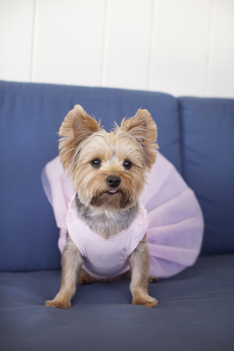 Dog Of Honor in Pink Tutu Dress Portrait | Tampa Bay Wedding Photographer Djamel Photography
