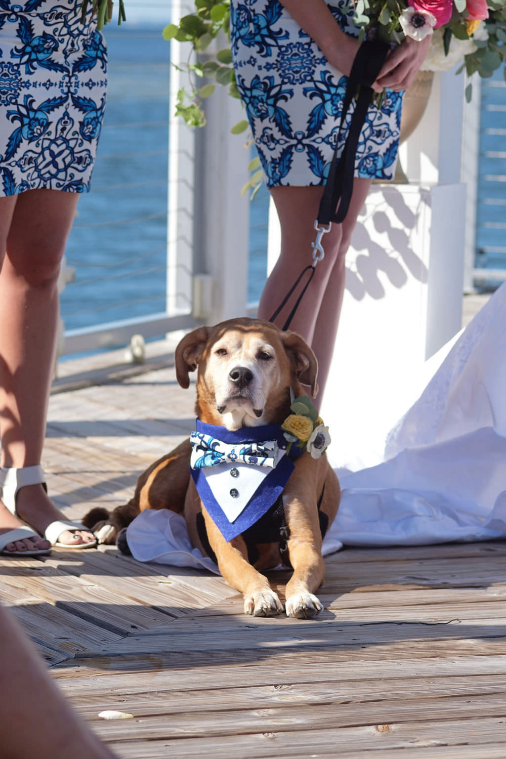 Dog in Blue Tuxedo Wedding Ceremony Waterfront Portrait | Island Inspired Wedding Venue The Godfrey Hotel and Cabanas Tampa | Tampa Bay Photographer Marc Edwards Photographs | FairyTail Pet Care