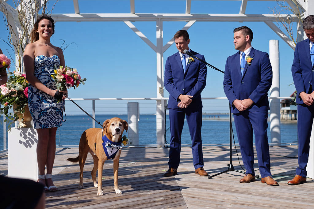 Citrus Inspired Wedding Ceremony, Groom in Blue Suit with Orange Floral Boutonniere, Bridesmaid in Short Blue and White Dress with Design, Dog in Blue Tuxedo Bandana | Waterfront Island Inspired Wedding Venue The Godfrey Hotel and Cabanas Tampa | Tampa. Bay Wedding Photographer Marc Edwards Photographs | Wedding Pet Planner FairyTail Pet Care
