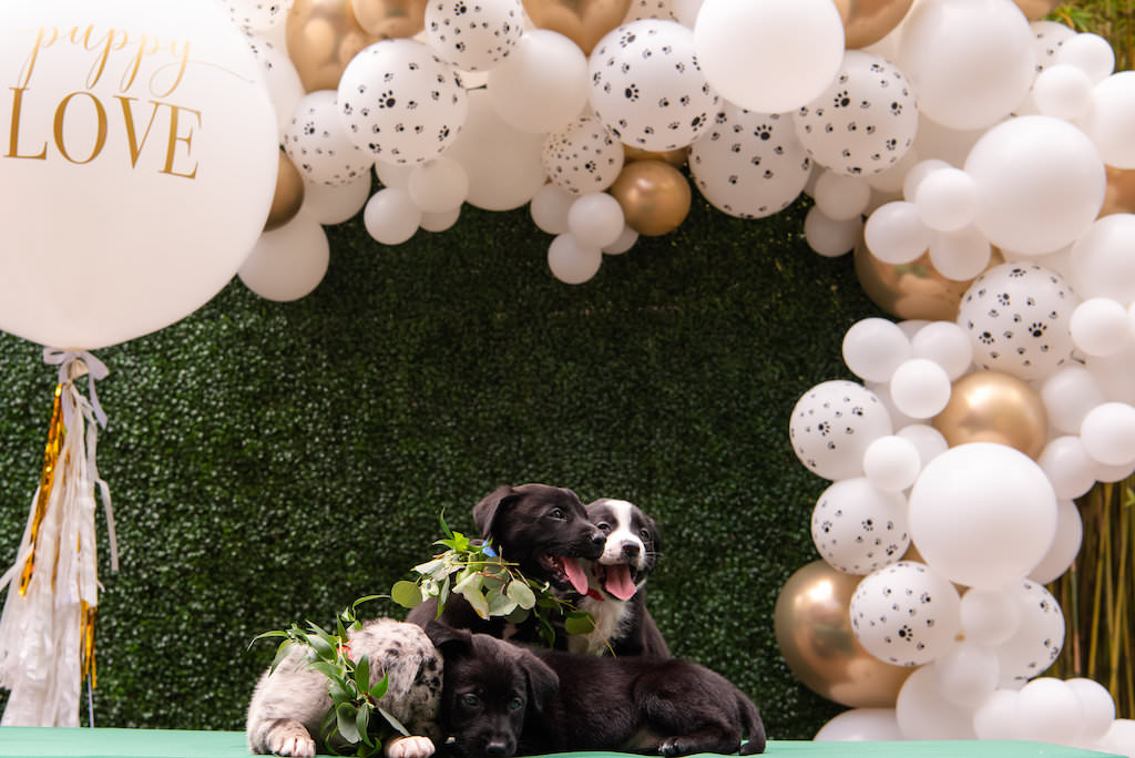 Three Puppies with Greenery Leaf Collar, Gold and White Balloon Backdrop and Greenery Wall Backdrop | Tampa Bay Wedding Photographer Caroline and Evan Photography | Designer and Planner Southern Glam Weddings and Events | St. Pete Wedding Event NOVA 535 | Pet Coordinators FairyTale Pet Care