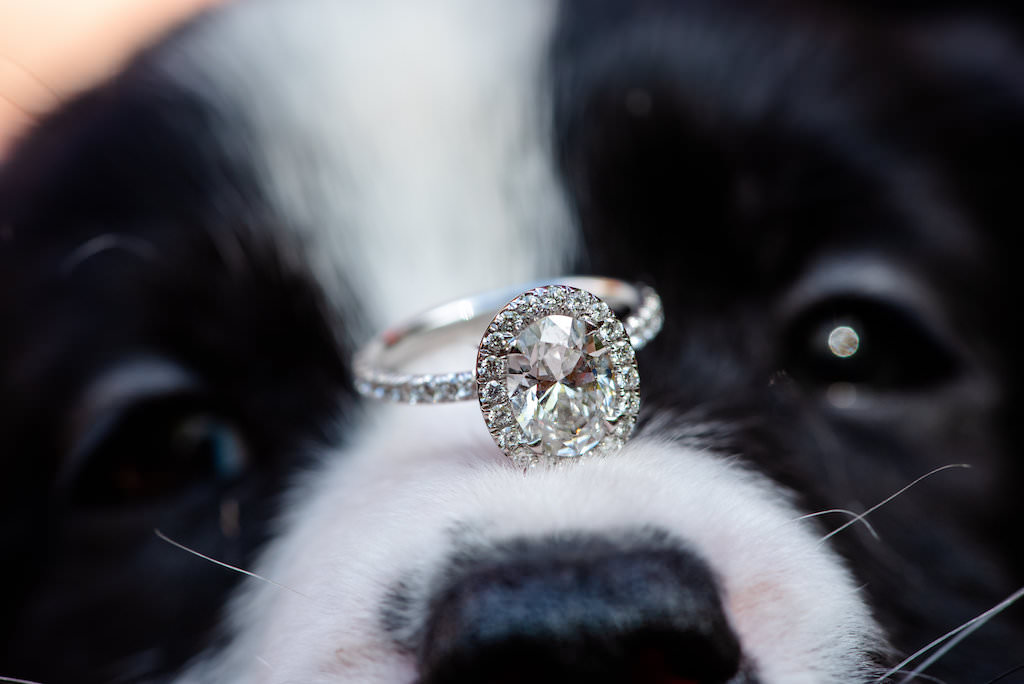 Oval Diamond Halo Engagement Ring and Diamond Band on Black and White Dog Nose | Tampa Bay Wedding Photographer Caroline and Evan Photography | Pet Coordinators FairyTale Pet Care