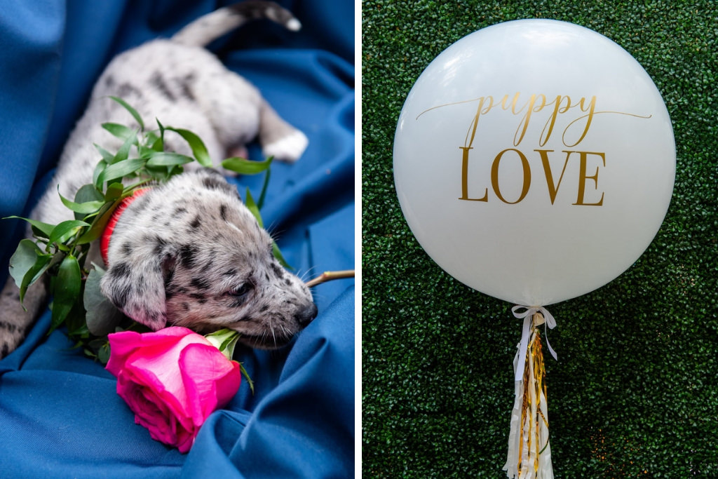 Speckled Grey and White Puppy with Greenery Leaf Collar and Pink Rose, Large Round White Balloon with Gold Font | Tampa Bay Wedding Photographer Caroline and Evan Photography | Pet Coordinators FairyTale Pet Care | Designer and Planner Southern Glam Weddings & Events | Florist Monarch Events And Design