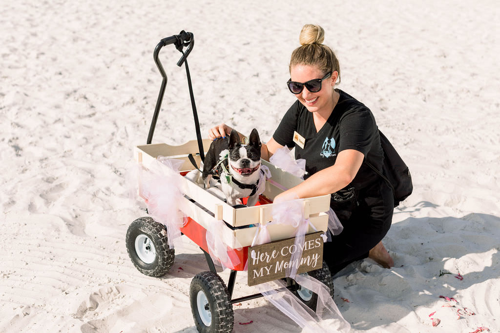 Dog in Wagon with Wooden Wedding Sign on Clearwater Beach | Pet Planner FairyTail Pet Care