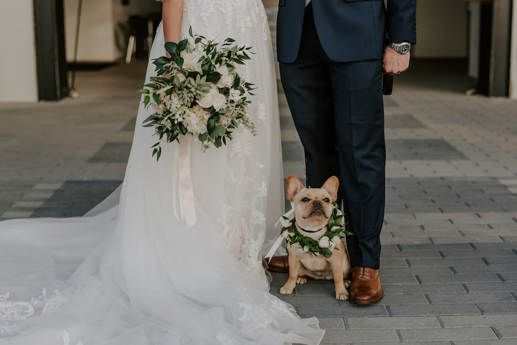 French Bulldog with White Rose Greenery Floral Dog Collar, Bride Holding Mix and Match Floral Stem and Ivory Flower Wedding Bouquet with Succulents   Tampa Bay Pet Planner FairyTail Petcare