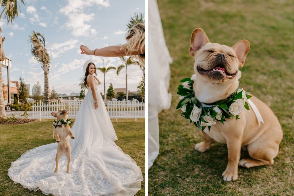 Florida Bride and Smiling French Bulldog, White Rose Dog Collar with Greenery   Tampa Bay Wedding Pet Planner FairyTail Pet Care
