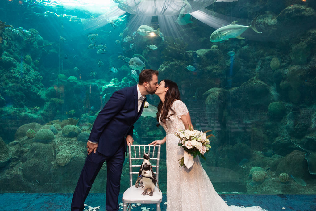 Classic Bride and Groom Kissing Wedding Portrait with Penguins on Silver Chiavari Chairs at Unique Downtown Tampa Wedding Venue The Florida Aquarium, Bride Holding Garden Inspired Ivory and Blush Pink Roses Floral Bouquet