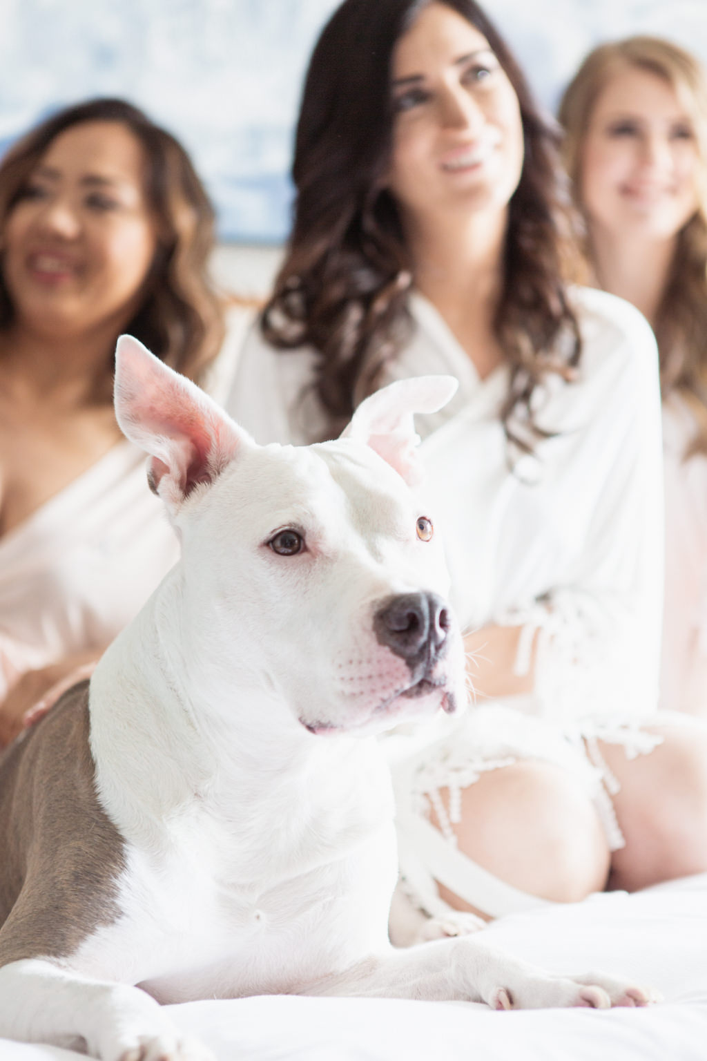 Tampa Bride, Bridesmaids in Matching Blush Pink Robes and Dog on Hotel Bed Getting Wedding Ready Portrait   Wedding Hair and Makeup Femme Akoi   Wedding Pet Planner FairyTail Pet Care