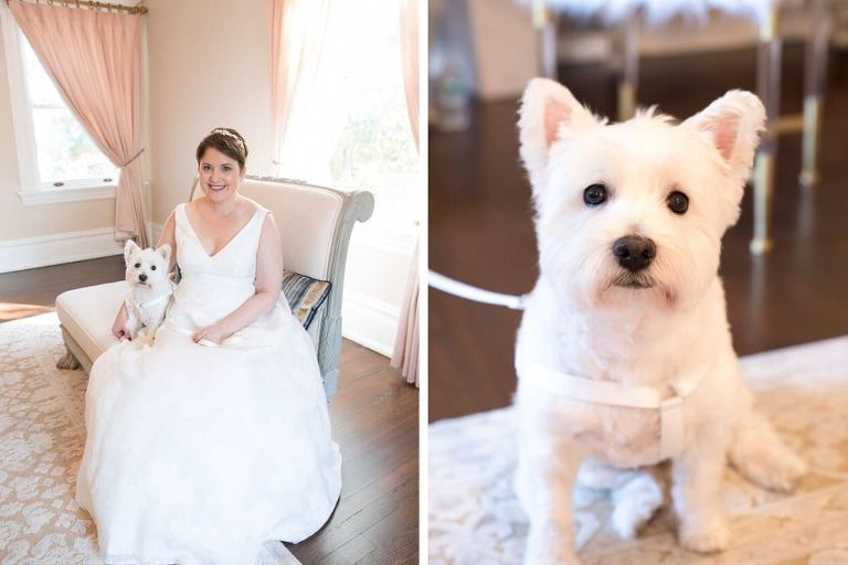 Classic Bride in V Neckline Wedding Dress with White Terrier Dog Portrait | Tampa Bay Wedding Photographer Carrie Wildes Photography