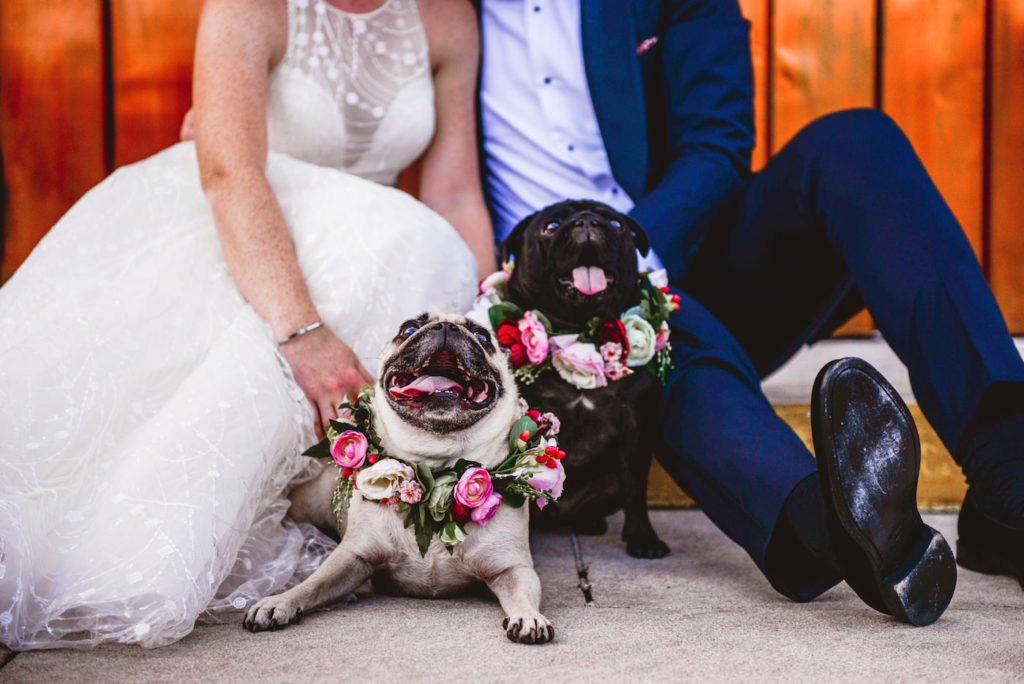 Bride and Groom Outdoor Portraits with Pet Dogs of Honor in St. Pete Florida | Wedding Pugs Wearing Flower Crown Collars | White Embroidered Organza Ballgown Illusion Neck Bib Neckline Bridal Gown and Classic Navy Groom Suit