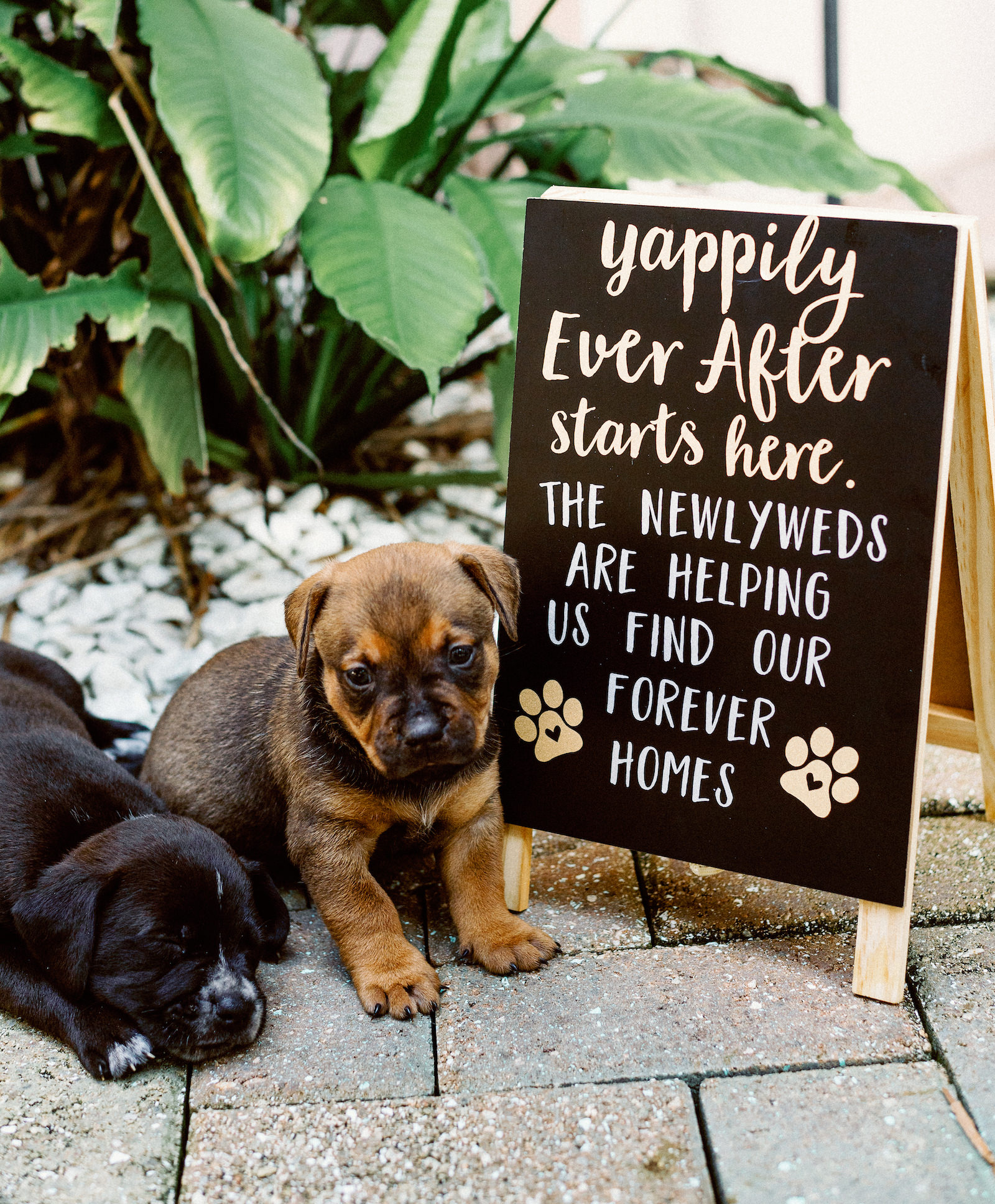 Wedding Adoptable Puppies Pets by Fairy Tail Pet Care