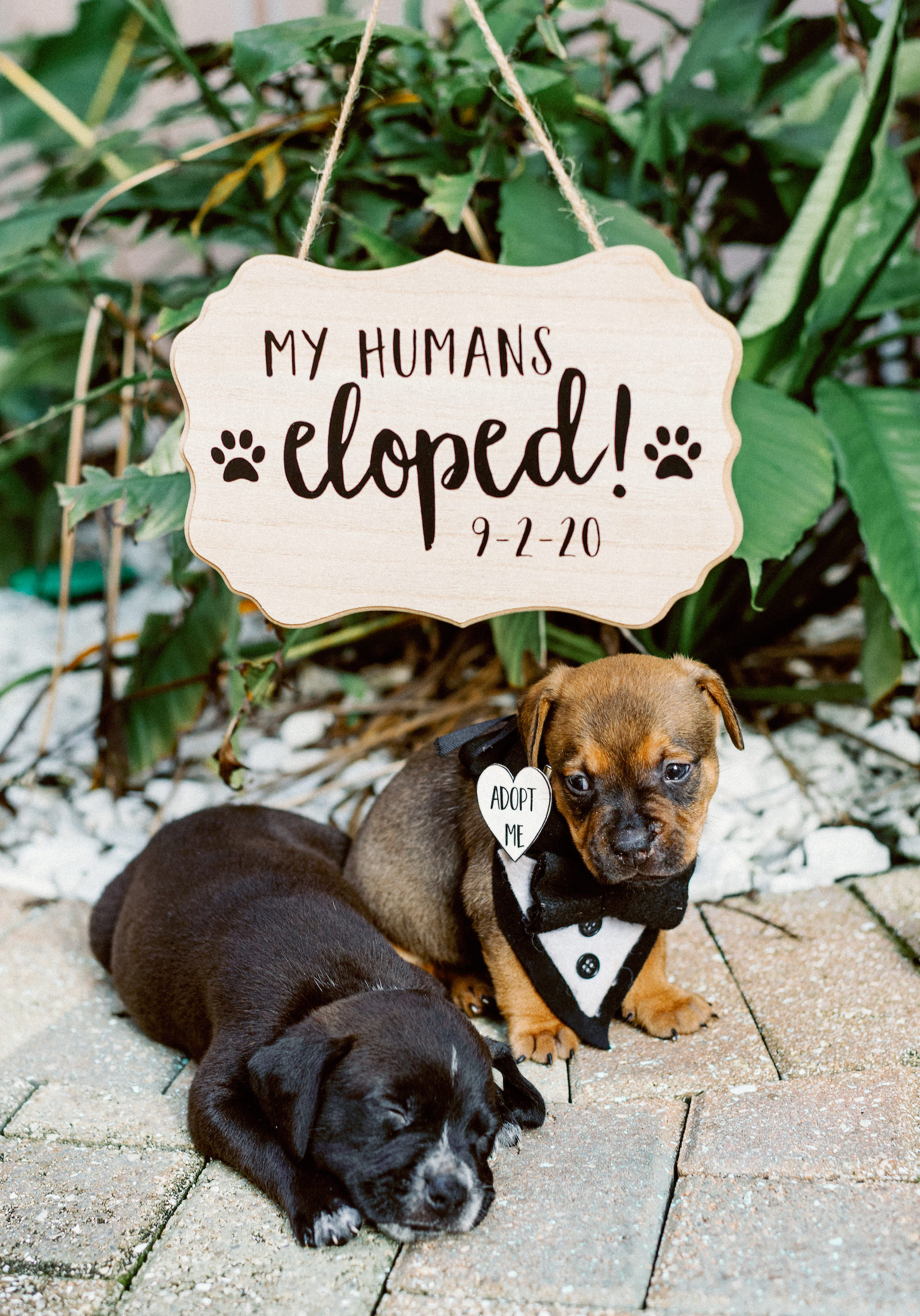 Wedding Adoptable Puppies Pets by Fairy Tail Pet Care   COVID Intimate Micro Wedding Elopement