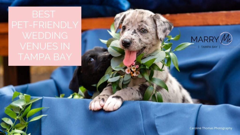Best Pet-Friendly Wedding Venues in Tampa Bay | Pet Planners Fairytail Pet Care
