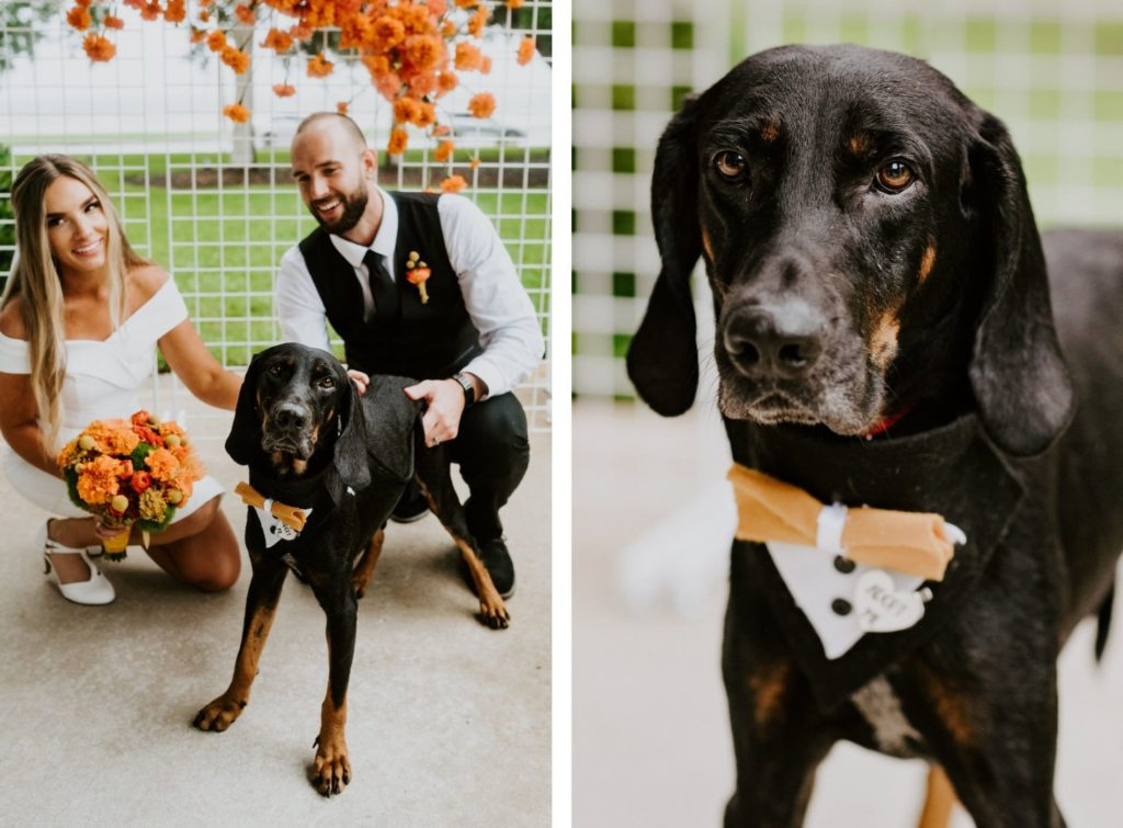 Retro Mid Century Modern Bride Holding Orange Marigold Floral Bouquet and Groom with Black Dog Wearing Tuxedo Bandana and Bowtie | Tampa Bay Pet Planner FairyTail Pet Care