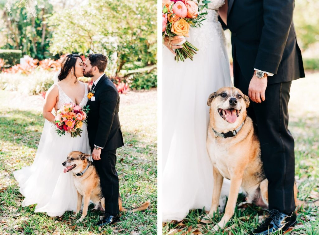 Garden Bride in Plunging V Neckline Lace Tule A-Line Wedding Dress Holding Vibrant Colorful Pink, Orange and Greenery Floral Bouquet Kissing Groom with Dog   Tampa Bay Wedding Florist Monarch Events and Design